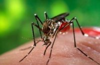 10-healthy-diet-tips-dengue-patients